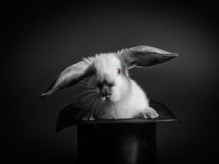 Czy króliki ocalą Wenezuelę przed głodem?
