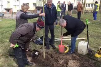 Radny wyciął drzewa, później protestował przeciwko Lex Szyszko
