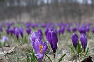 To już dziś! O której astronomiczna wiosna?