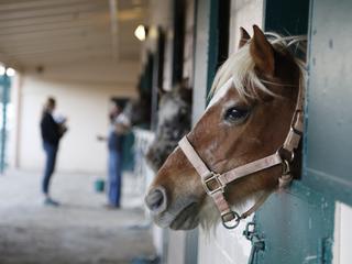 Końska dawka wrażliwości