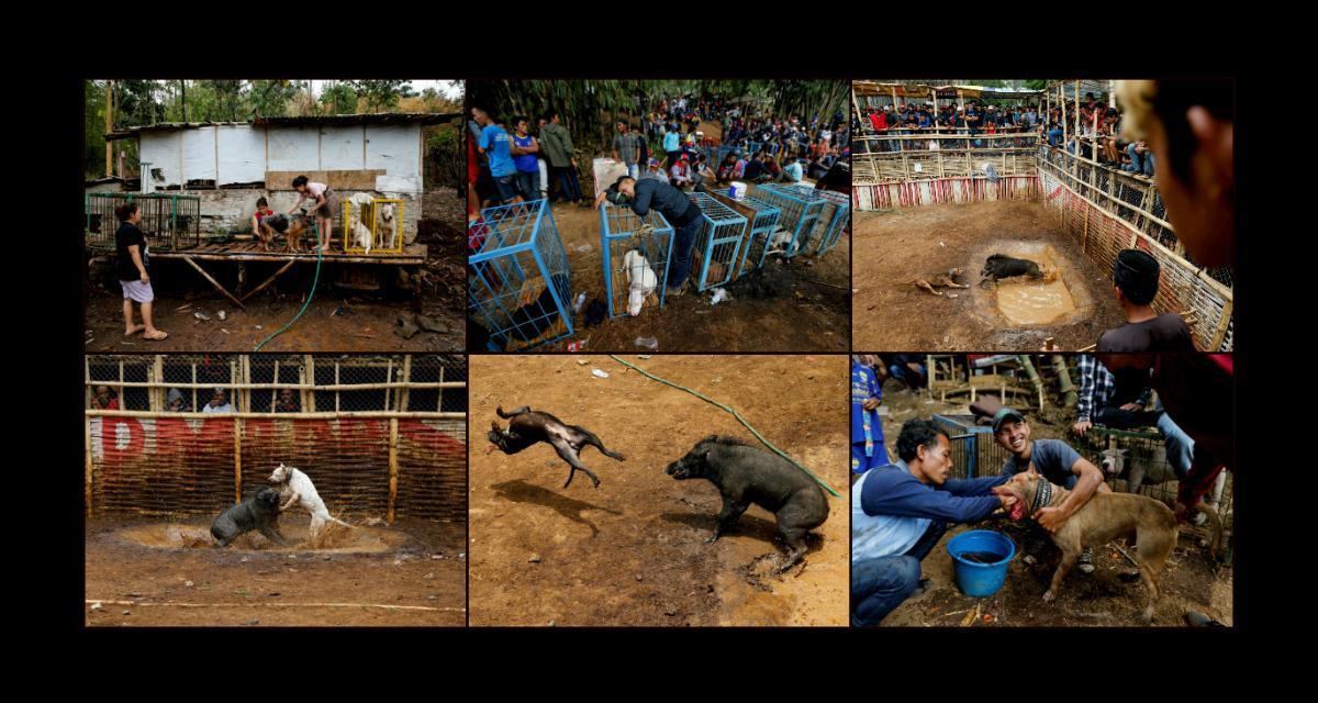 Zwierzęta na ringu