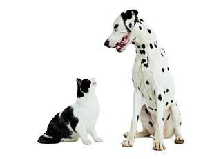Psy górą