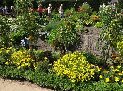 Kwiaty ogród zieleń