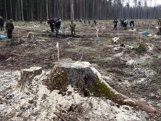 Operator Polsatu dotkliwie pobity podczas obchodu Puszczy Białowieskiej
