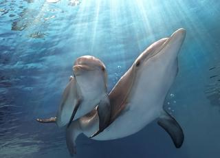 Ludzki świat delfinów