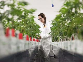 Wchodzi w życie ustawa o medycznej marihuanie. Co to oznacza dla polskich pacjentów?