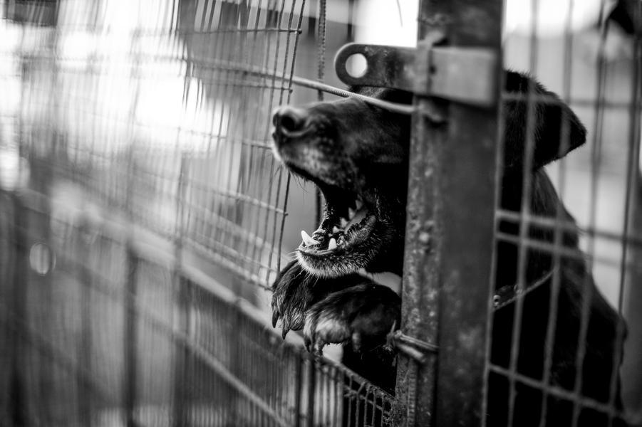 pies psy schronisko klatki