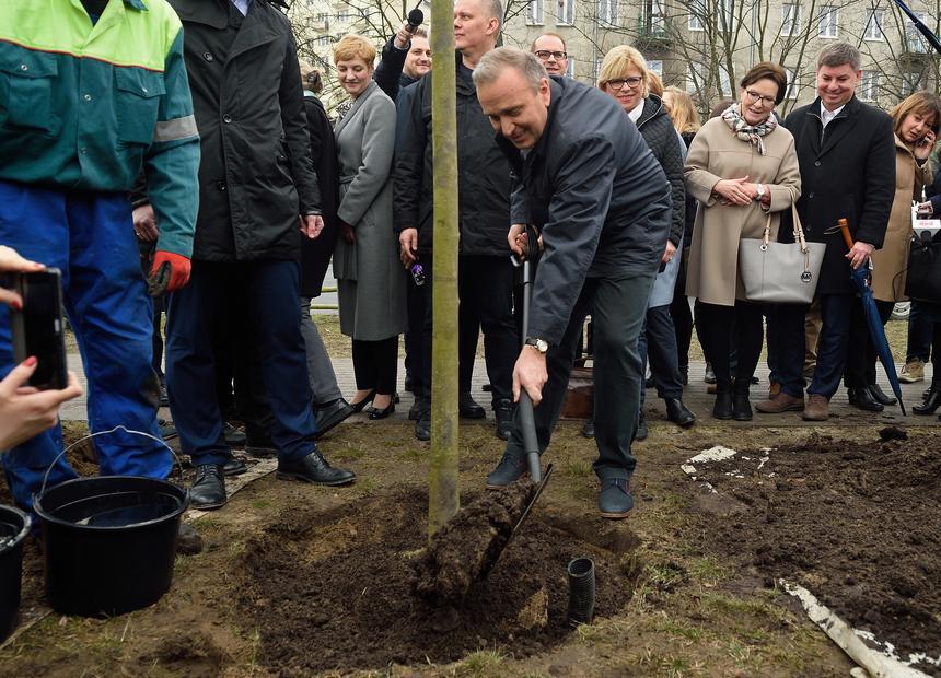 Warszawa, 21.03.2017. Przewodniczący PO Grzegorz Schetyna sadzi drzewo przy ul. Raszyńskiej.