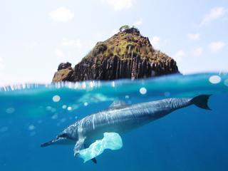 Oceany pełne są plastikowych drobin. Apetyt na nie mają ryby, które potem zjadamy