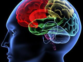 Mózgi są jak linie papilarne. Nie ma dwóch identycznych - dowiedli naukowcy