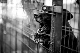 Na Kaukazie od dwóch tygodni trwa masowe zabijanie psów