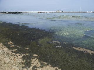 Morze Bałtyckie zmienia się w zielone, pełne szlamu bajoro