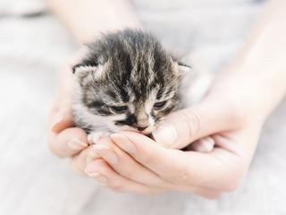 Jak uchronić nasze zwierzaki przed groźnymi chorobami?