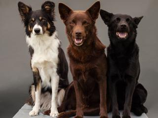 Kundle są gorsze? Nonsens. To odrębna rasa psów. A nawet superrasa