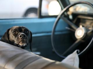 Pies uwięziony w gorącym samochodzie. Kiedy wolno ci wybić szybę?