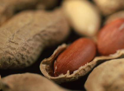 Groundnut / Peanut / Erdnuss
