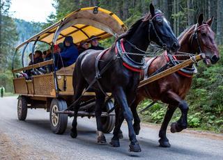 Konie i ludzie wMorskimOku