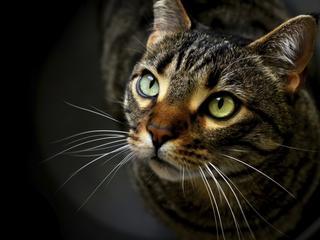 Kto robił pasztet z kota, czyli wieki trudnej przyjaźni