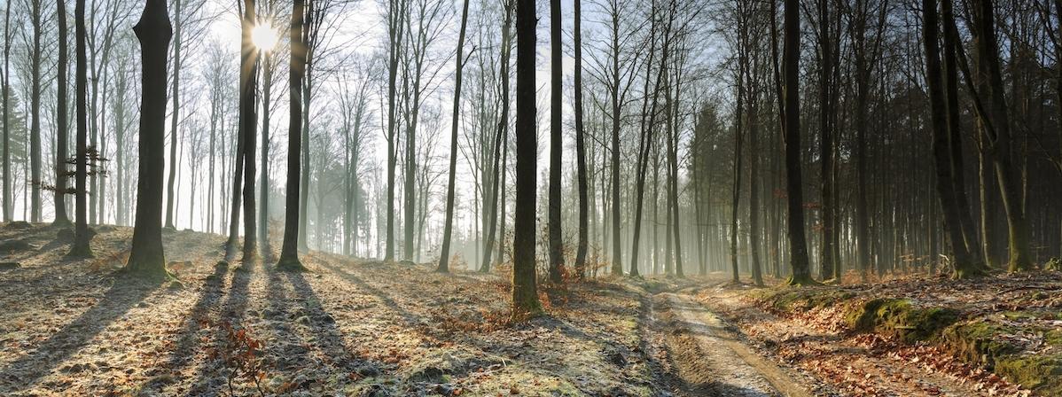 jesień zima las