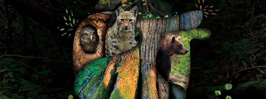 """""""Godzina dla Ziemi"""". WWF walczy o Puszczę Karpacką"""