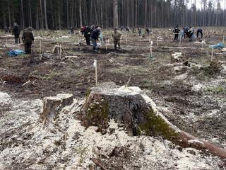 Resort ministra Szyszki zmienia starodrzew Puszczy Białowieskiej w plantację