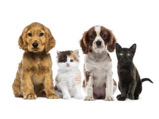 Pies czy kot? Kto jest najlepszym przyjacielem Polaka?
