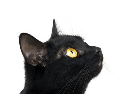 kot, czarny kot
