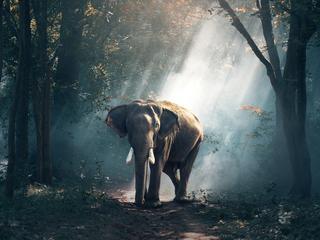 Bezsenność słoni