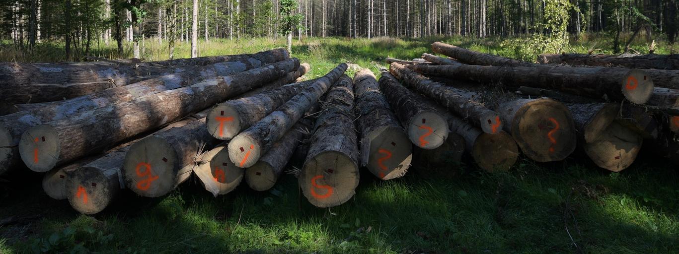 Puszcza Białowieska las drzewa zieleń bagna
