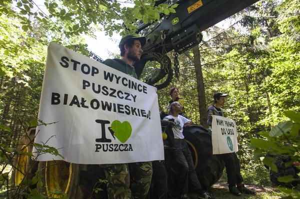 Piata blokada wycinki w Puszczy Bialowieskiej