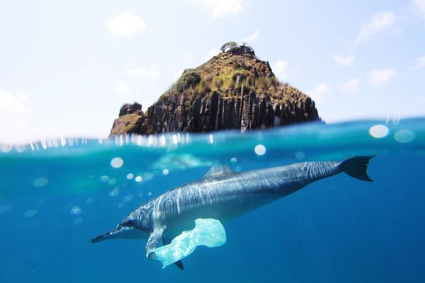 Dorsz doprawiony plastikiem