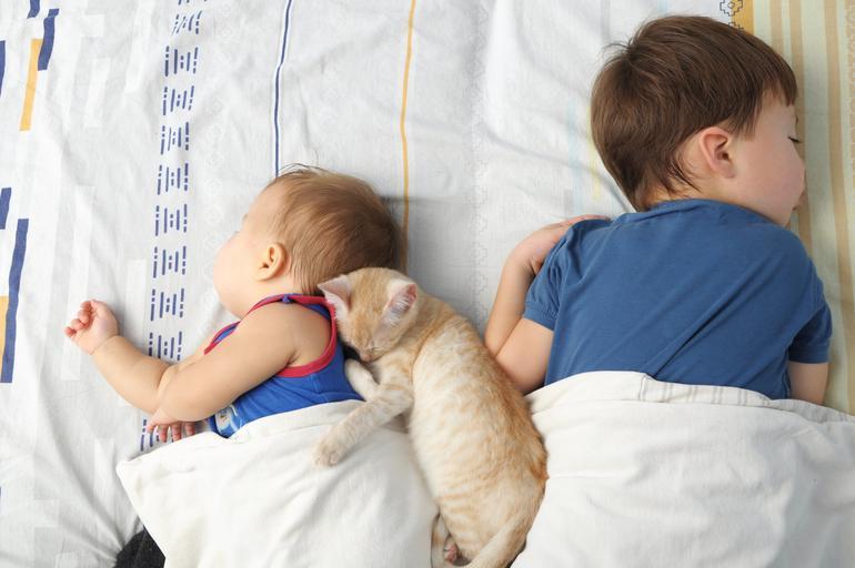 kot, dziecko, dzieci