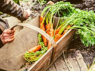 I Ty możesz zostać miejskim farmerem! Jak uprawiać warzywa w mieście?