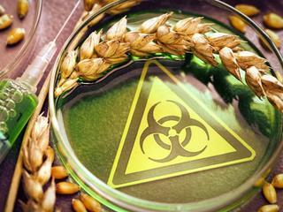 Wielka ściema ekoaktywistów. Rośliny GMO stały się ofiarami ataków ekoterroru