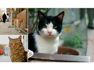 Koty są wieczne. Kociarze, oto film Waszego życia!