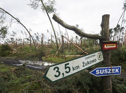 zniszczony las Suszek