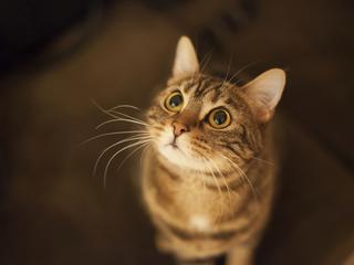Koty są samolubne i mają w nosie swojego właściciela?