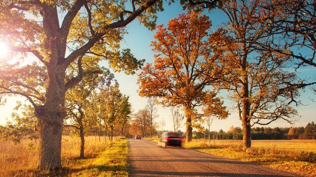 Jesień samochód