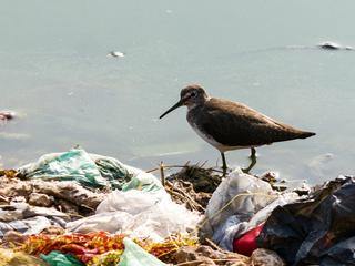 Nie ma już miejsca na Ziemi wolnego od plastiku