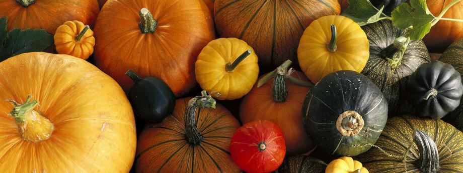 pumpkin dynia