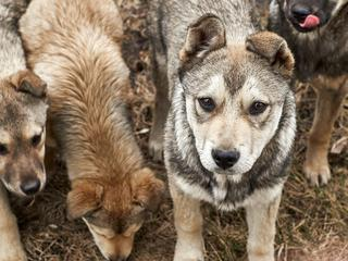 Część schronisk dla bezdomnych psów to w rzeczywistości obozy śmierci