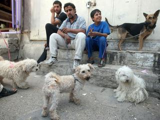 Pieski wojny