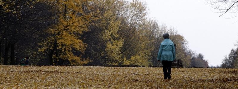 jesień, pogoda, drzewa, liście, chmury