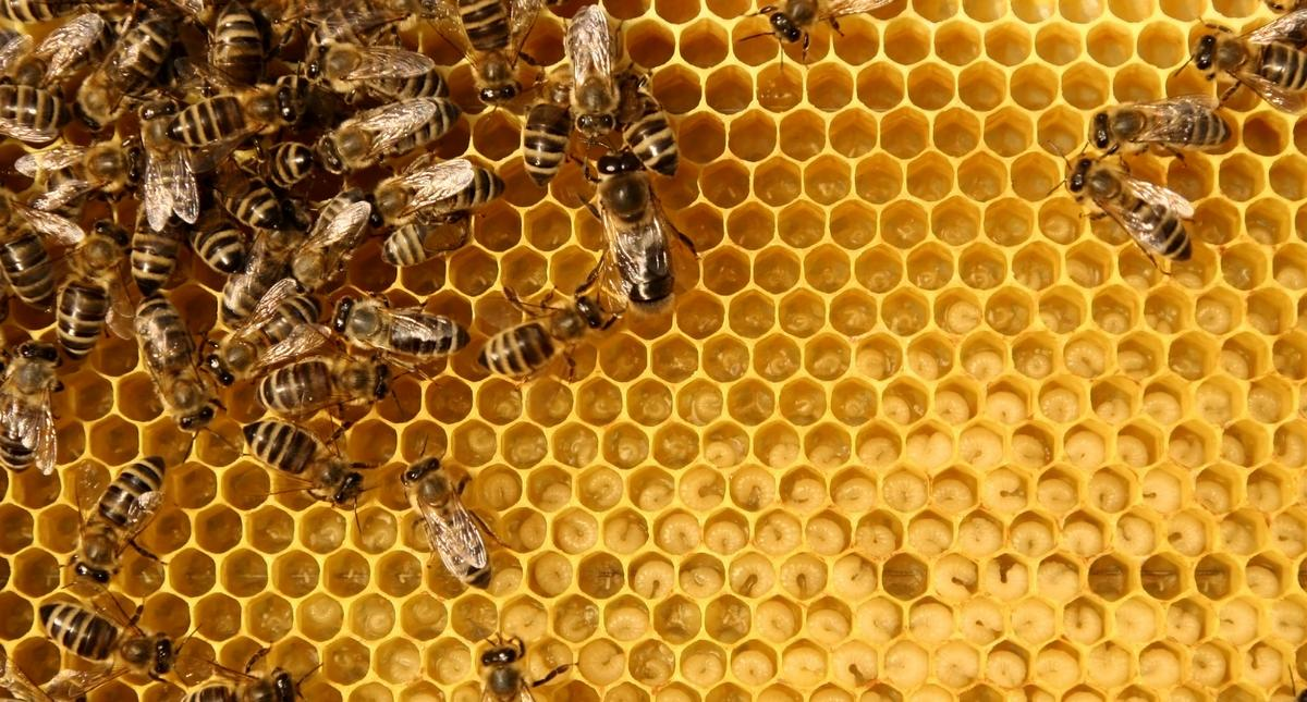 Worker bees hard at work within the beehive