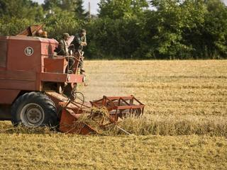 Gigantyczna kara i dramat rolników. Czy kryzys w ARiMR wpłynie na wynik wyborów samorządowych?