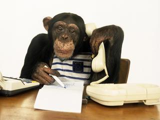 Dlaczego człowiek jest mądrzejszy od małpy?