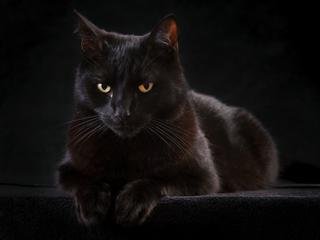 Wszystkie tajemnice kotów