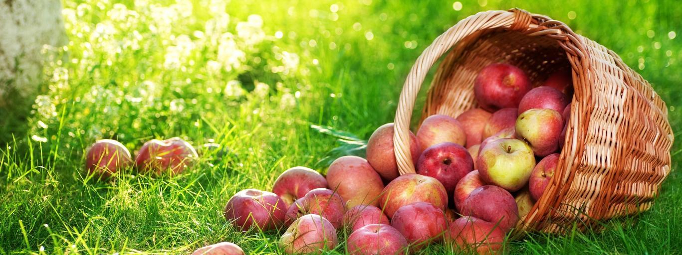 jabłko zdrowie jabłka