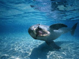 Naćpany jak delfin