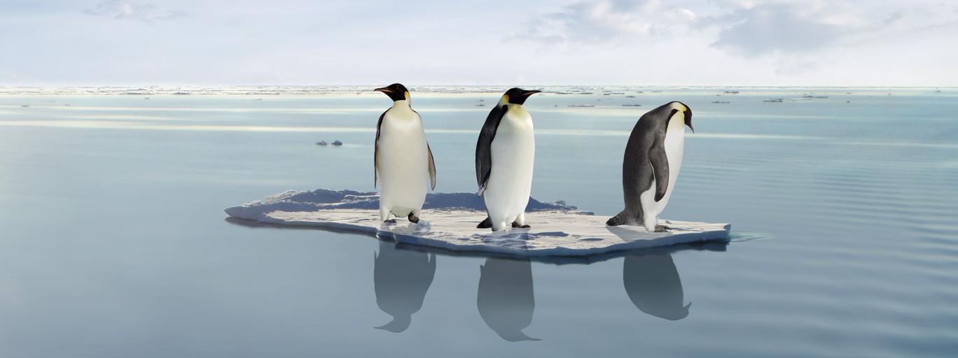 globalne ocieplenie, pingwiny